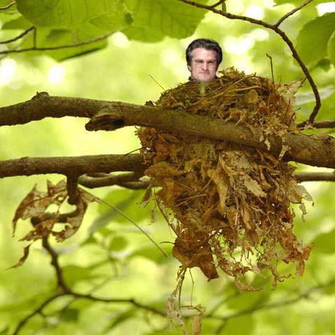 Kiper_emerging_from_nest_