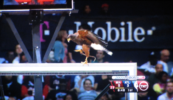 Atlanta Hawks bird disrupts playoffs