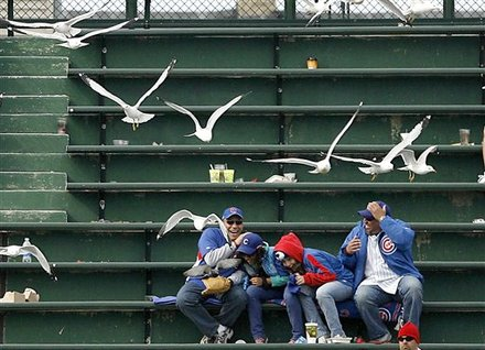 Cubs fans are for the birds